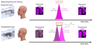Influences of expectation on perception
